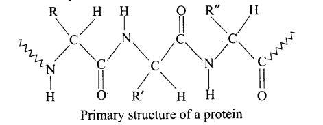 ncert-exemplar-problems-class-12-chemistry-biomolecules-45
