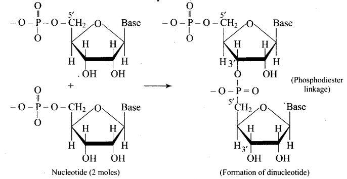 ncert-exemplar-problems-class-12-chemistry-biomolecules-34
