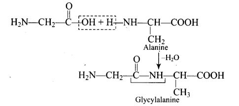 ncert-exemplar-problems-class-12-chemistry-biomolecules-31
