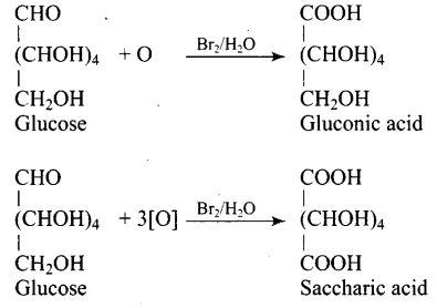 ncert-exemplar-problems-class-12-chemistry-biomolecules-19