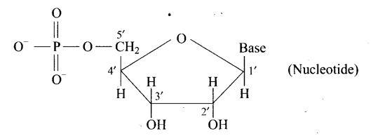 ncert-exemplar-problems-class-12-chemistry-biomolecules-18