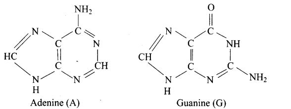 ncert-exemplar-problems-class-12-chemistry-biomolecules-16