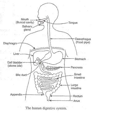 Life-Processes-Lakhmir-Singh-class-10-Biology-Solutions-68