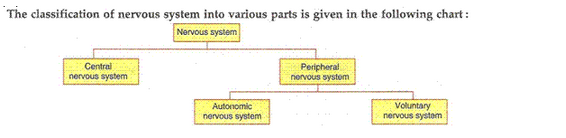 Control-And-Coordination-Lakhmir-Singh-class-10-Biology-Solutions-A-53