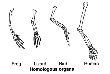heredity-and-evolution-chapter-wise-important-questions-class-10-science-2